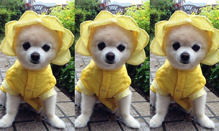 Top 10 Best Dog Raincoats in 2018