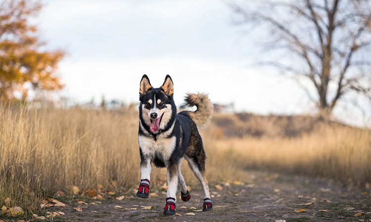 Top 10 Best Dog Boots in 2019