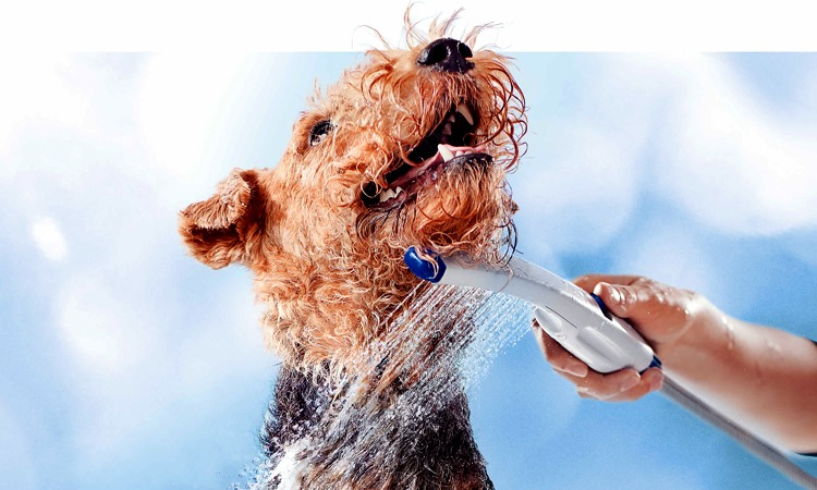 Top 10 Dog Shampoos in 2019
