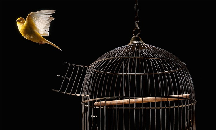 Top 10 Bird Cages in 2019