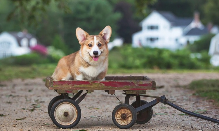 Top 10 Best Pet Strollers in 2019