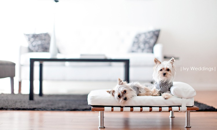 Top 10 Elevated Dog Beds in 2019