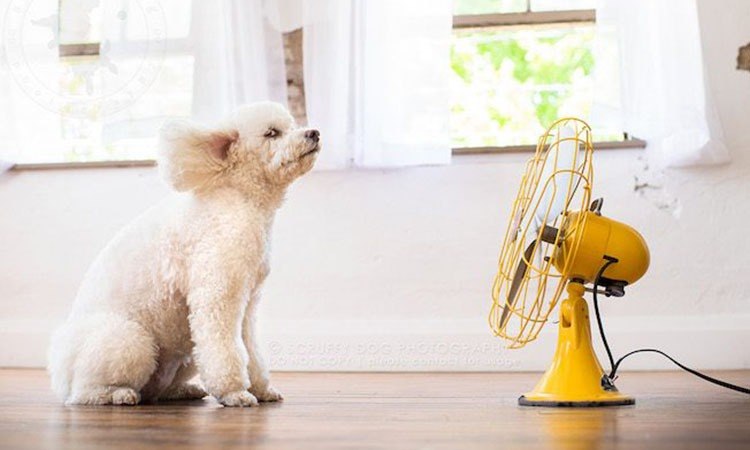 Best Floor Fans to Keep You Cool in 2019