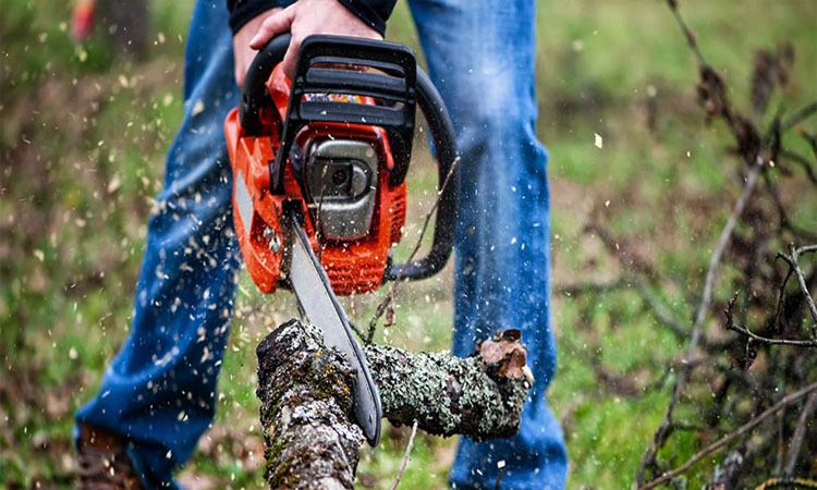 Top 10 Best Chainsaw to Buy in 2019