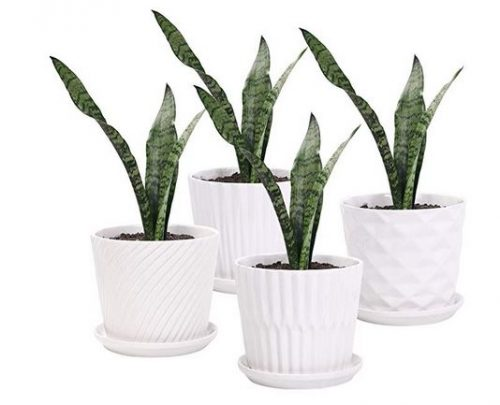 Plant Pots - 5.5 Inch Cylinder Ceramic Planters with Connected Saucer
