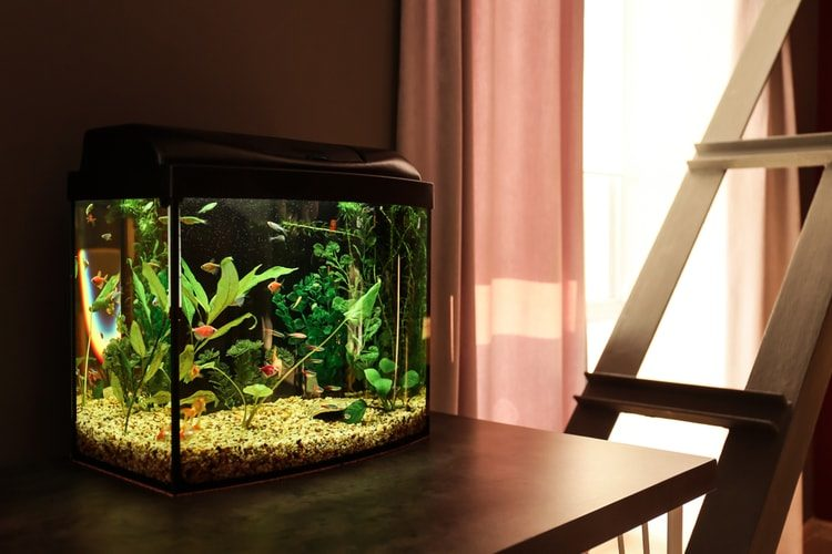 Fish Tank Stands i