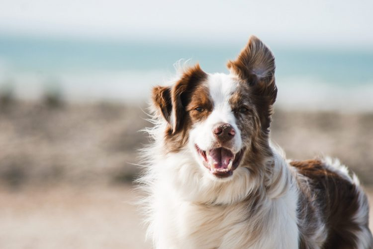 How To Fix Dog Hair Problems